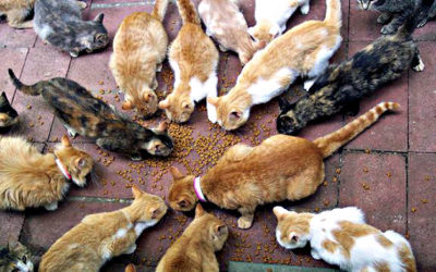 How many cats do they have in Morocco?