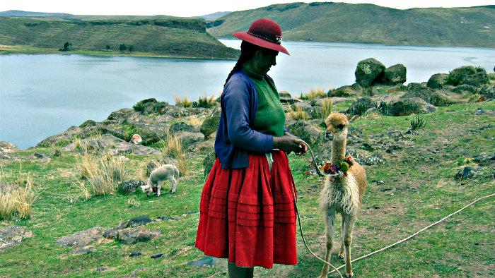 People in Peruvian Andes raise llamas, alpacas, vicunas.